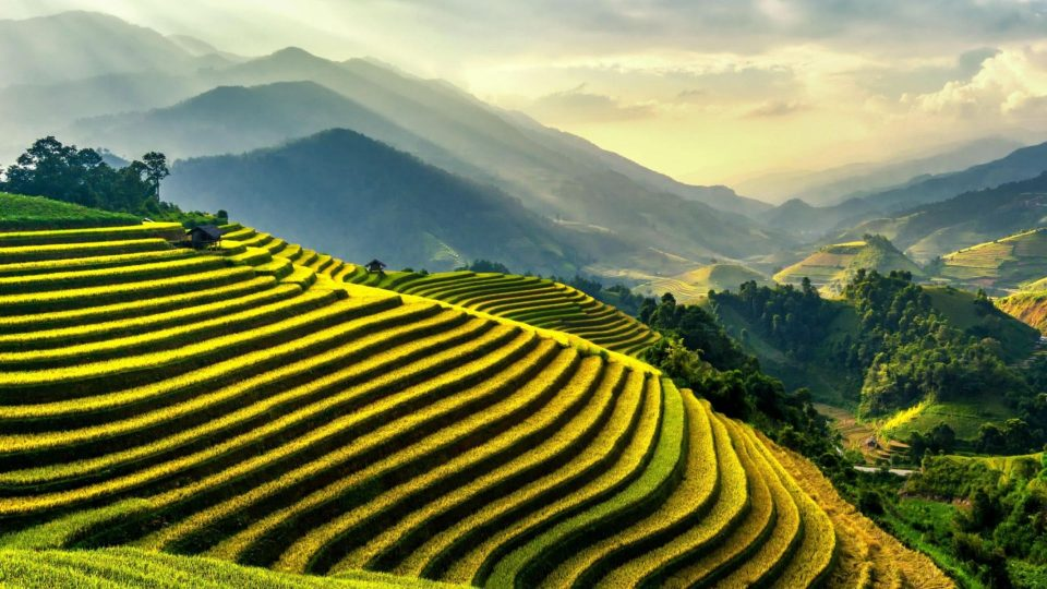 Mountain Fields
